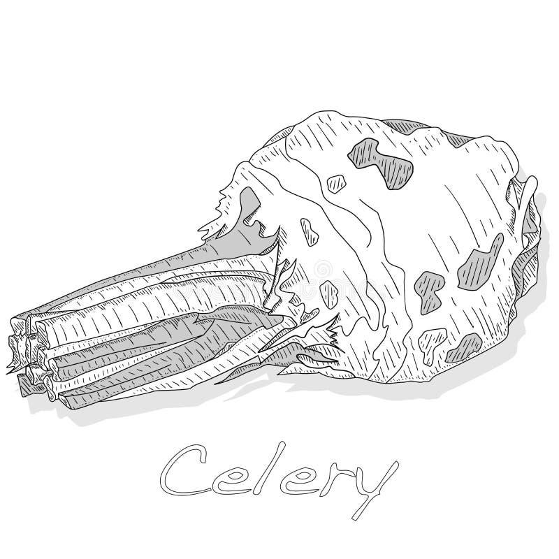 Иллюстрация вектора сельдерея monochrome изолированная на белом backgrond бесплатная иллюстрация