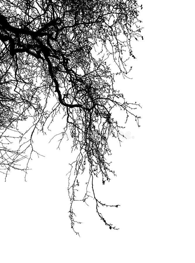 Иллюстрация вектора силуэта дерева Ealistic EPS10 стоковое изображение rf