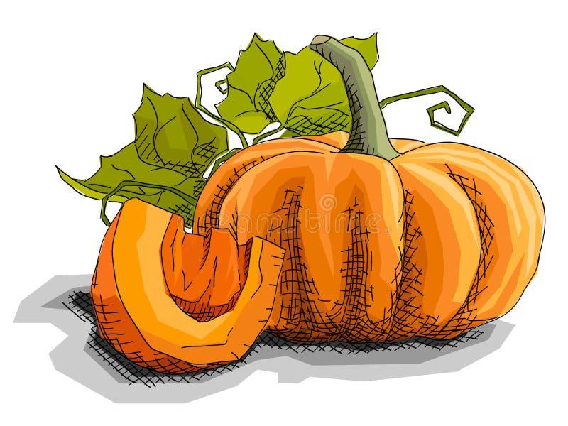 Иллюстрация вектора тыквы овоща чертежа бесплатная иллюстрация