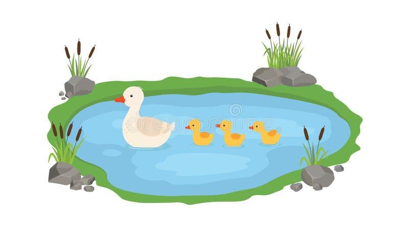 Иллюстрация вектора утки и утят Заплывы утки матери в озере с небольшими утятами вокруг травы иллюстрация вектора