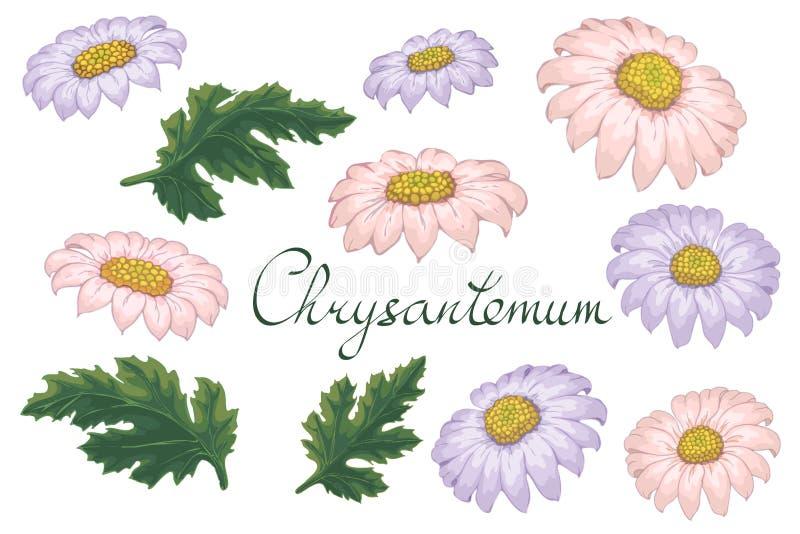 Иллюстрация вектора флористическая с фиолетовой хризантемой Изолированные элементы на белой предпосылке Пурпур и розовая золот-ма иллюстрация вектора
