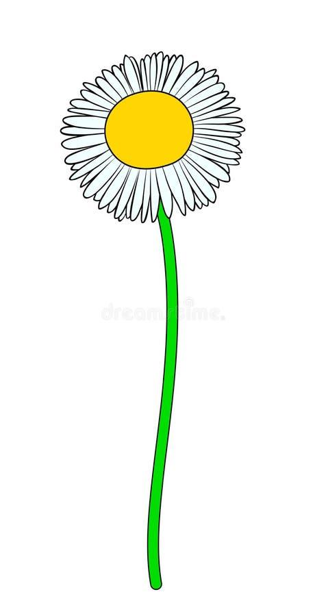 Иллюстрация вектора цветка стоцвета иллюстрация вектора