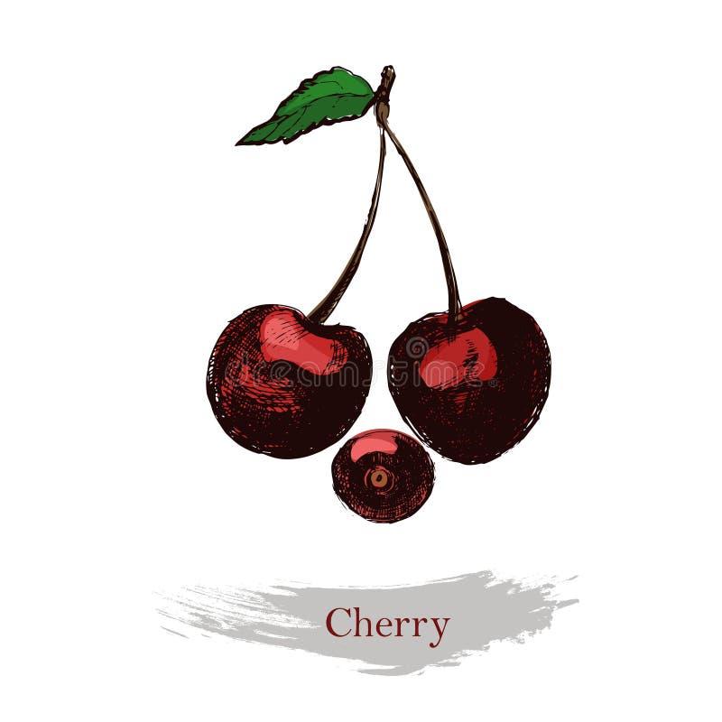 Иллюстрация вишни Винтажной вишня чернил нарисованная рукой, изолированная на белой предпосылке иллюстрация штока
