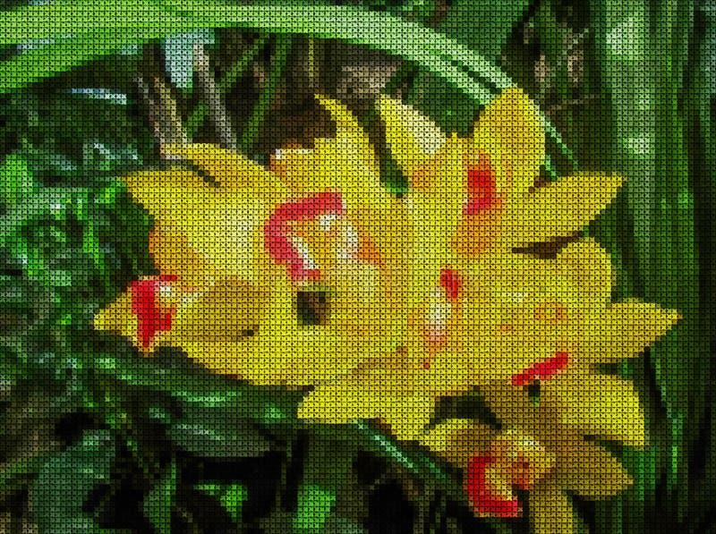 иллюстрация Вышивка крестиком цветок цветет phalaenopsis орхидей орхидеи бесплатная иллюстрация