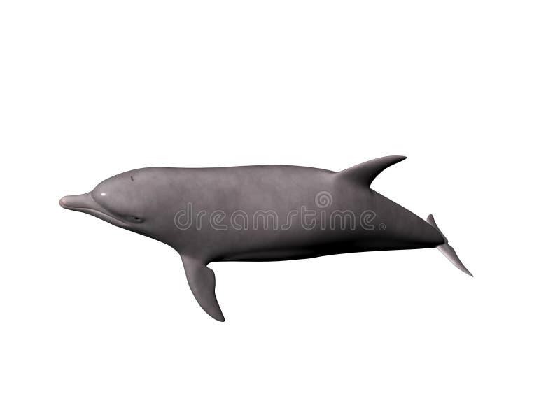 иллюстрация дельфина