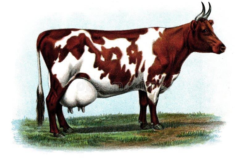 Иллюстрация животного стоковое фото rf