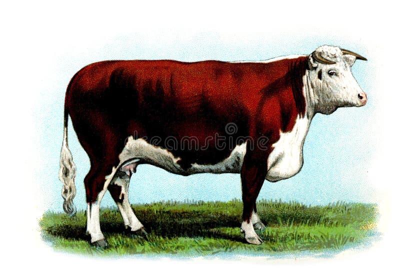 Иллюстрация животного стоковые фотографии rf