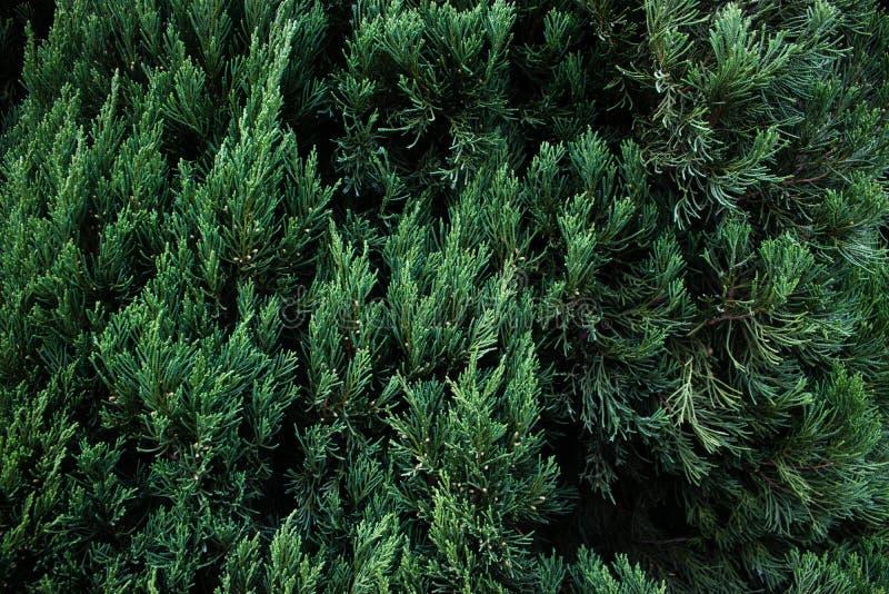 иллюстрация зеленого цвета пламени предпосылок цифровая стоковое изображение rf