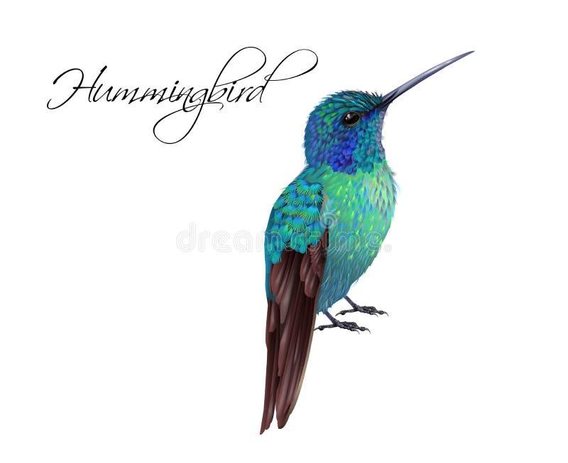 Иллюстрация колибри реалистическая иллюстрация штока