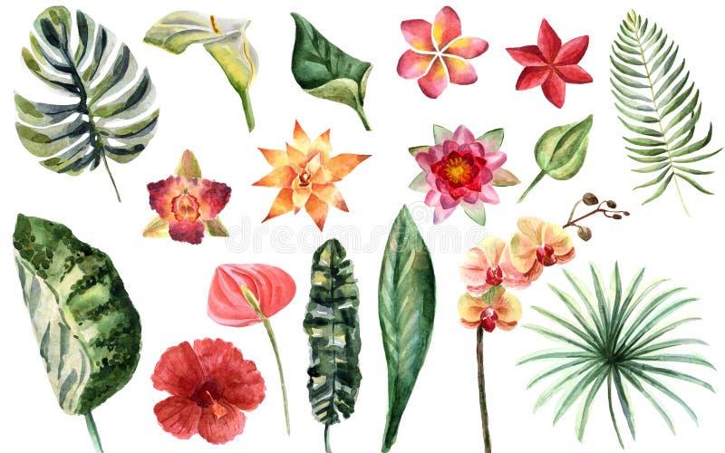 Иллюстрация лета акварели яркая с тропическими цветками иллюстрация штока
