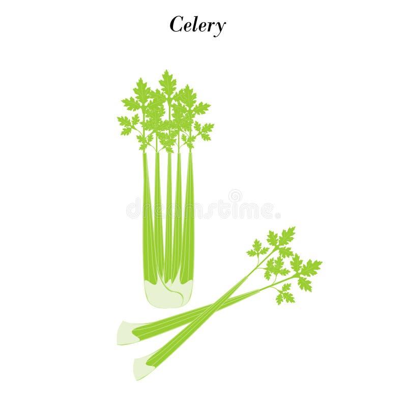 Иллюстрация овоща сельдерея бесплатная иллюстрация