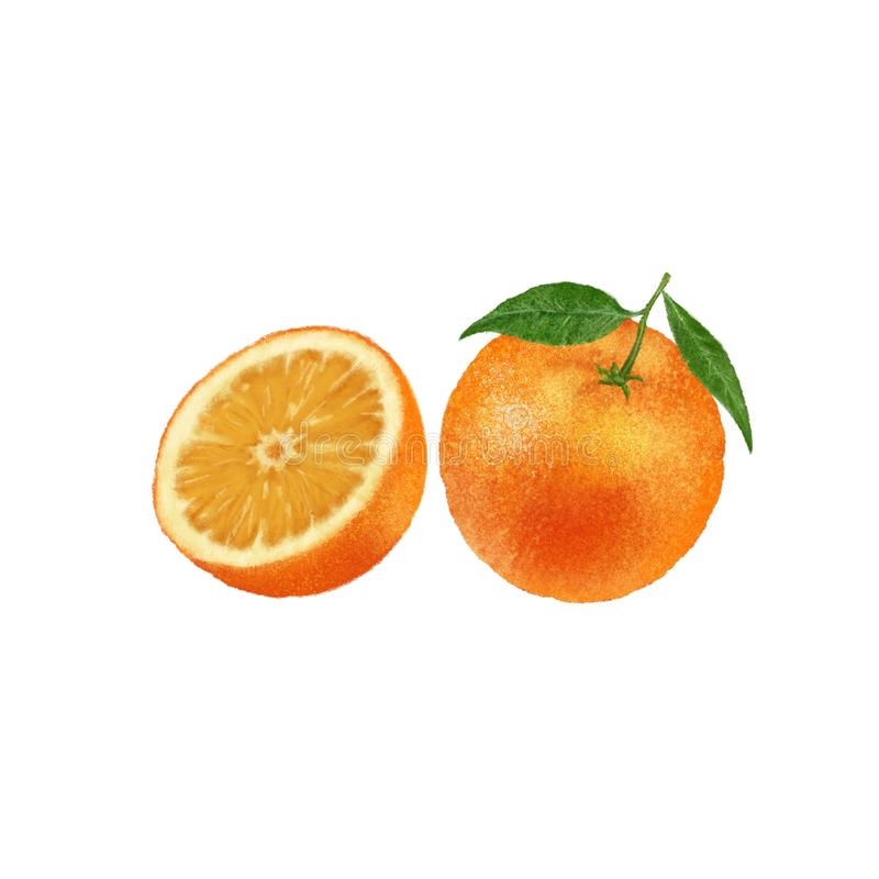 Иллюстрация оранжевой руки плода вычерченная на предпосылке Цитрус с зелеными листьями бесплатная иллюстрация