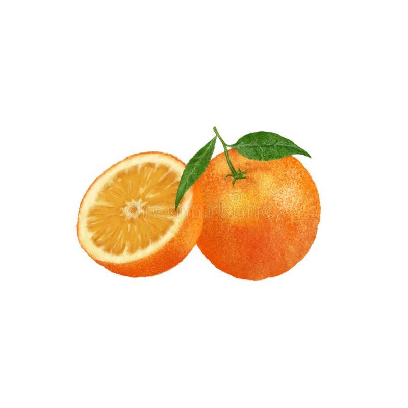 Иллюстрация оранжевой руки плода вычерченная на предпосылке Цитрус с зелеными листьями иллюстрация вектора
