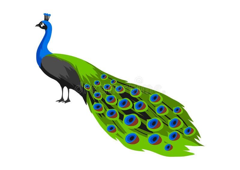 Иллюстрация павлина Тропическая экзотическая птица на белой предпосылке иллюстрация штока
