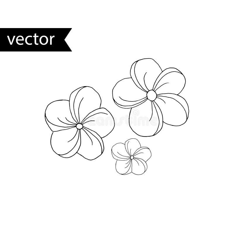 Иллюстрация плана вектора тропического завода Цветки plumeria простой черно-белой руки вычерченные иллюстрация штока