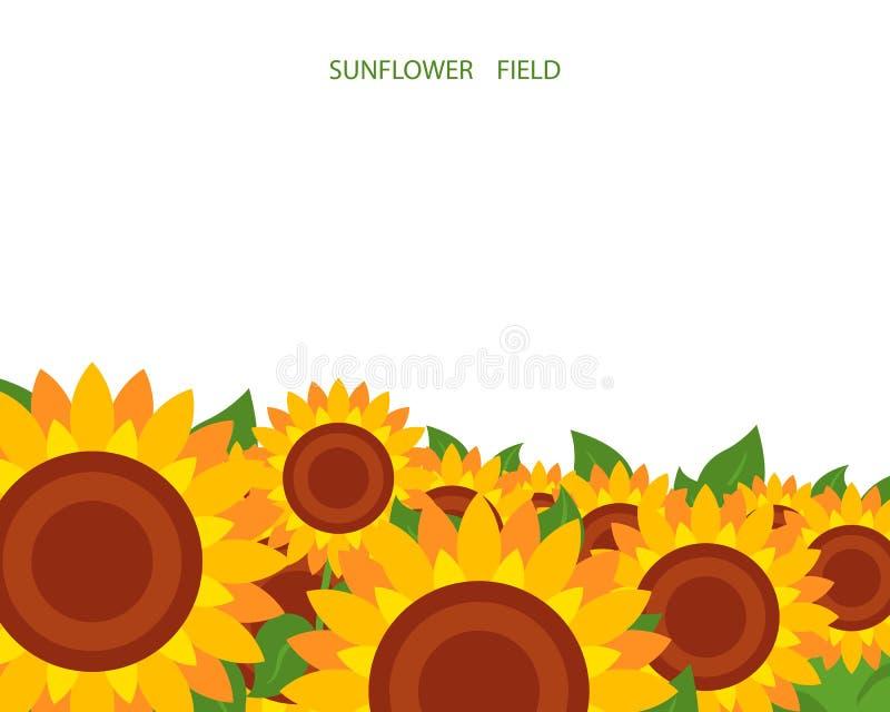 Иллюстрация поля солнцецвета на белой предпосылке Установите, соответствующий для дизайна крышки иллюстрация вектора