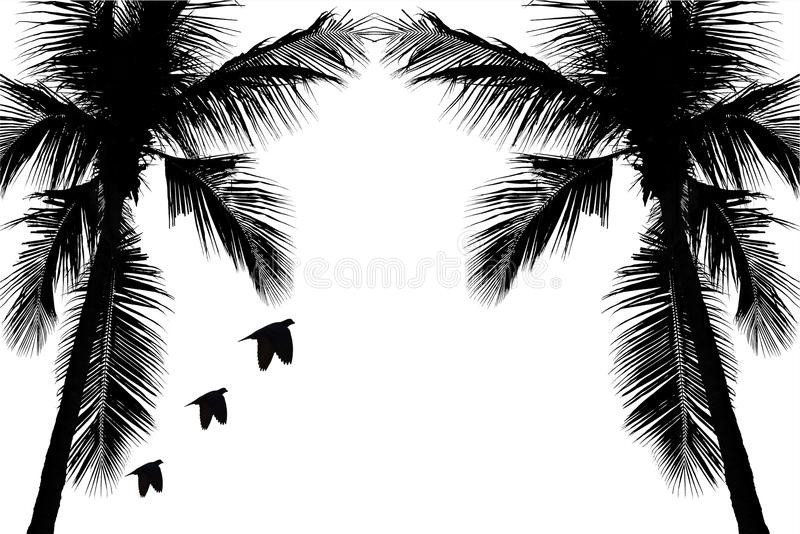 Иллюстрация при силуэт кокосовой пальмы изолированный на белом пути предпосылки и клиппирования иллюстрация вектора
