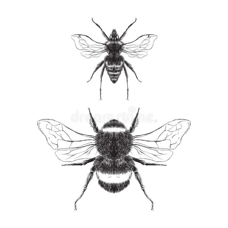 иллюстрация 2 пчел, черно-белая иллюстрация штока