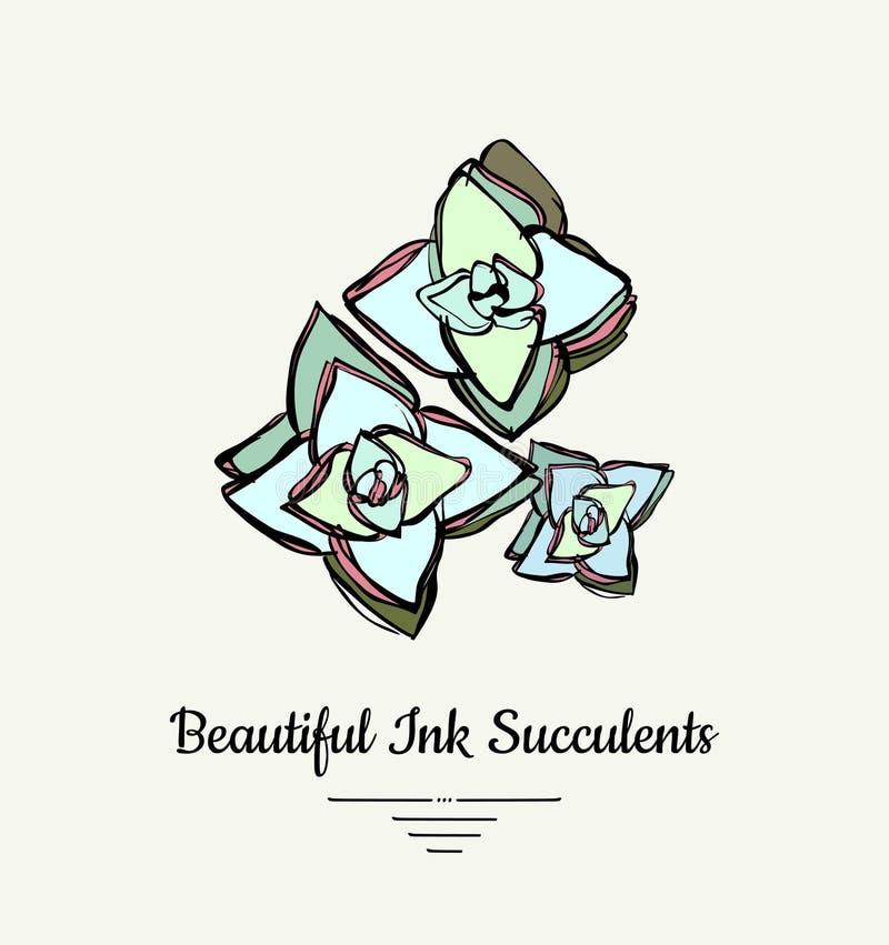 Иллюстрация руки Crassula вычерченным суккулентным изолированная вектором Логотип завода современных чернил суккулентный, значок, иллюстрация штока