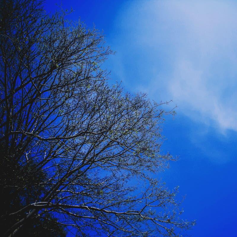 Иллюстрация световых лучей ветвей дерева неба стоковое фото rf