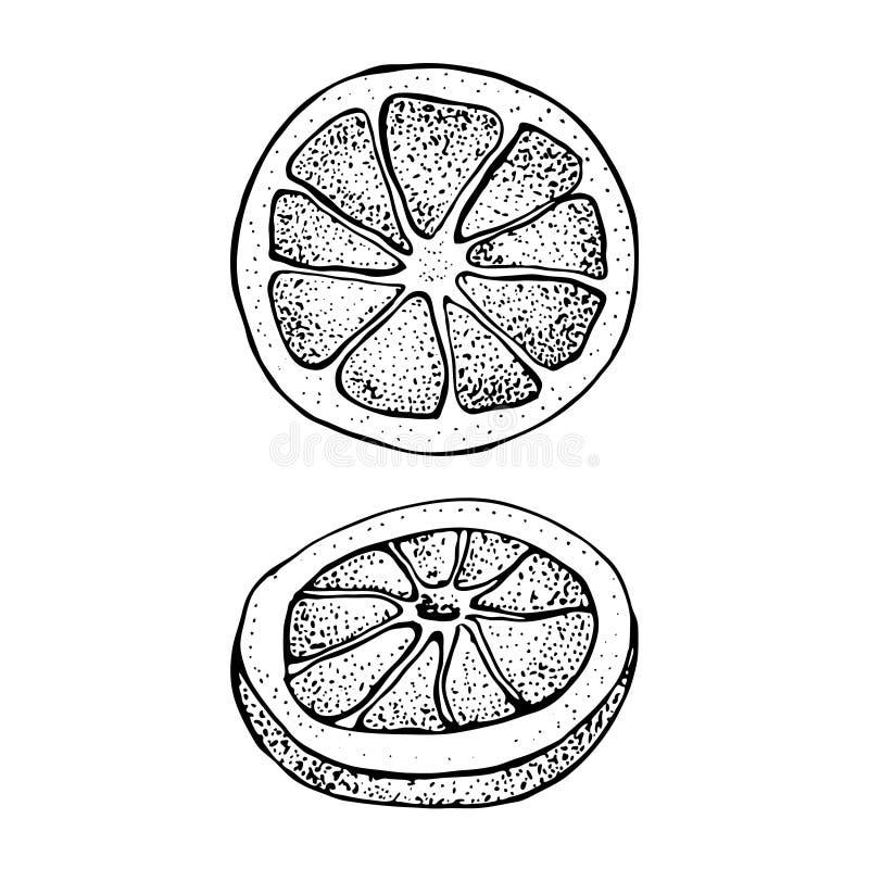Иллюстрация с цитрусовыми фруктами руки чернил вычерченными, эскиз вектора частей кусков Апельсин мандарина, tangerine, известка  бесплатная иллюстрация