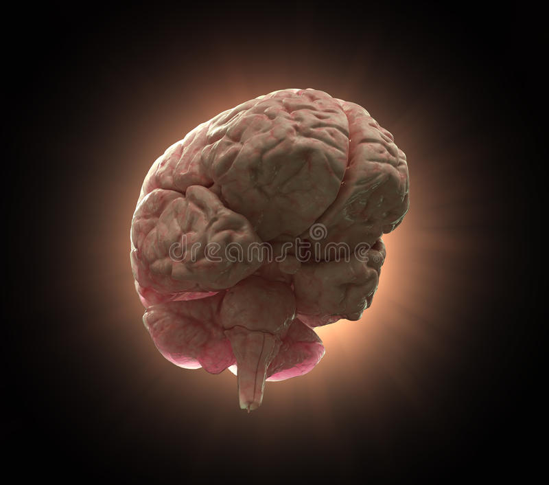 иллюстрация человека принципиальной схемы мозга иллюстрация вектора