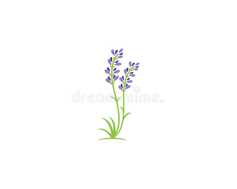 Иллюстрация шаблона векторного шаблона логотипа значка Lavender иллюстрация вектора