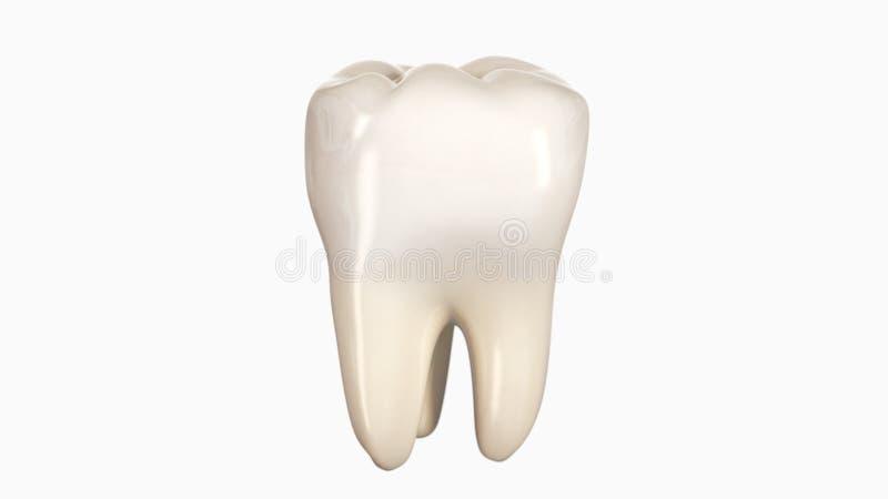 иллюстрация 3d зуба иллюстрация вектора
