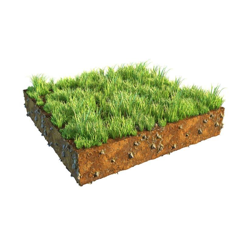 иллюстрация 3d поперечного сечения земли при трава изолированная на белизне стоковое фото rf