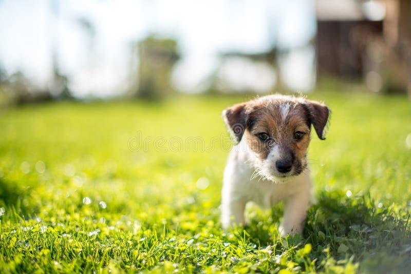 Имейте нового щенка стоковые фотографии rf