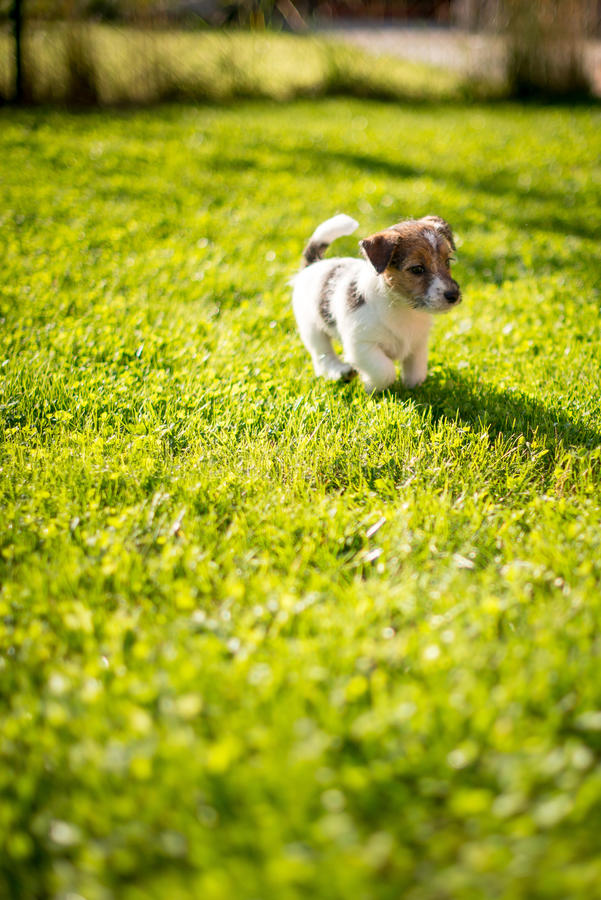 Имейте нового щенка стоковое фото