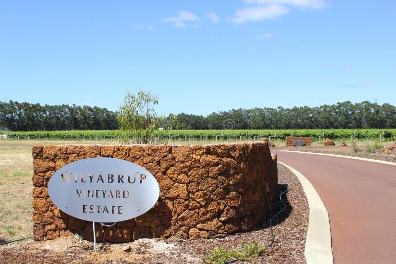 Имущество виноградника Wilyabrup в реке Маргарета, Австралии стоковые фото