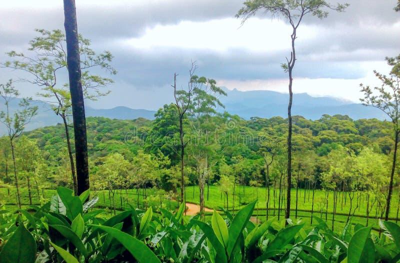 Имущество чая Цейлона стоковые изображения rf