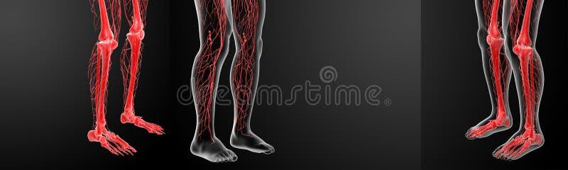 лимфатическая система стоковые фото