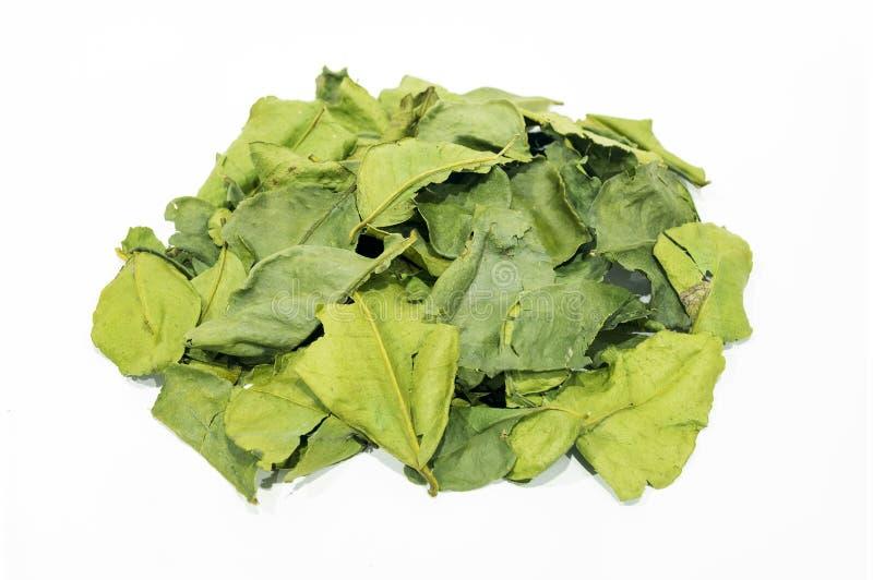 ингридиенты еды предпосылки изолировали белизну известки листьев kaffir тайскую стоковое изображение rf