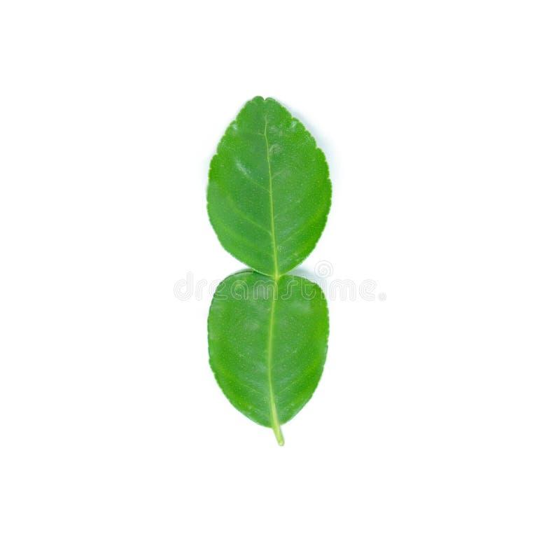 ингридиенты еды предпосылки изолировали белизну известки листьев kaffir тайскую стоковые фотографии rf