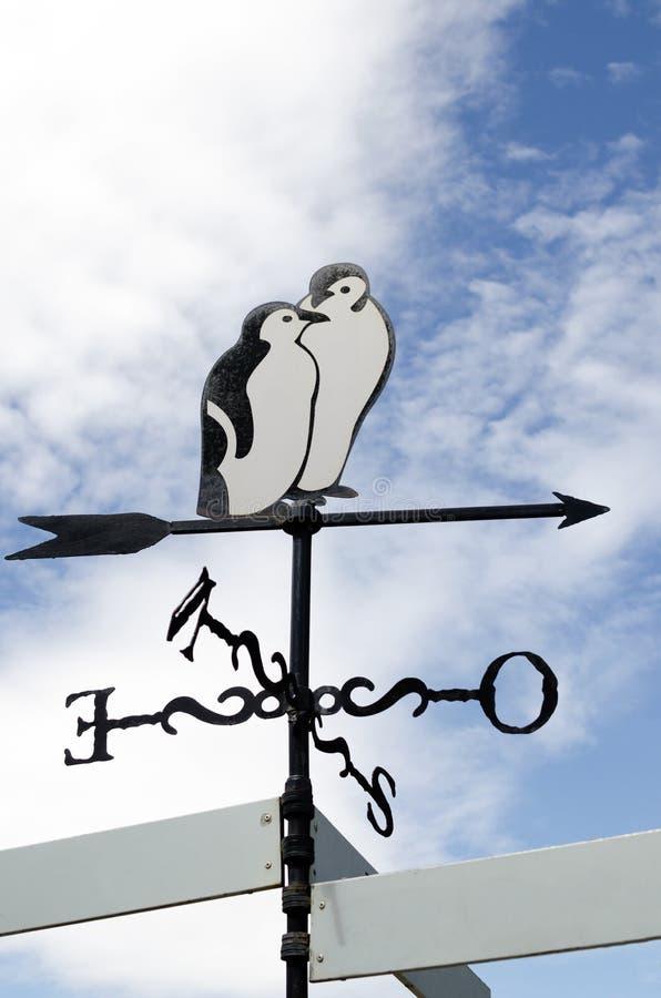 Индекс пингвина стоковое изображение