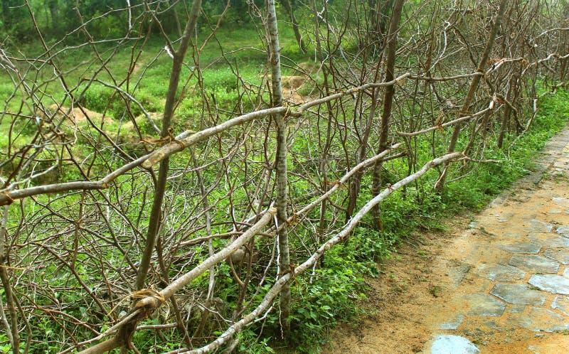 Индийская загородка ветвей древесины деревни стоковое фото rf