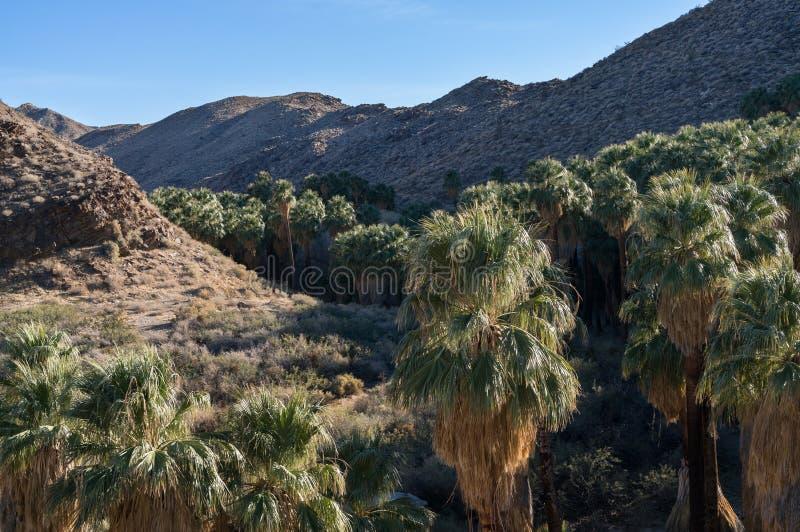 Индийский каньон, Palm Springs, Калифорния стоковые фотографии rf