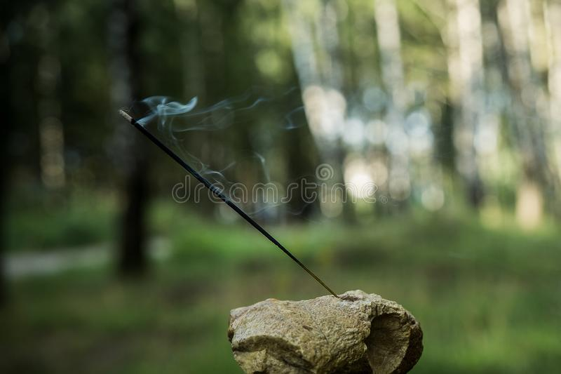 Индийский ладан осветил куря ручку против леса стоковое изображение rf
