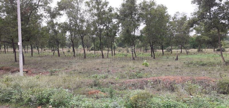 Индийский небольшой лес стоковые изображения rf