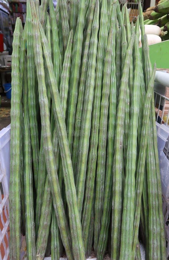 Индийский овощ drumstick стоковая фотография rf