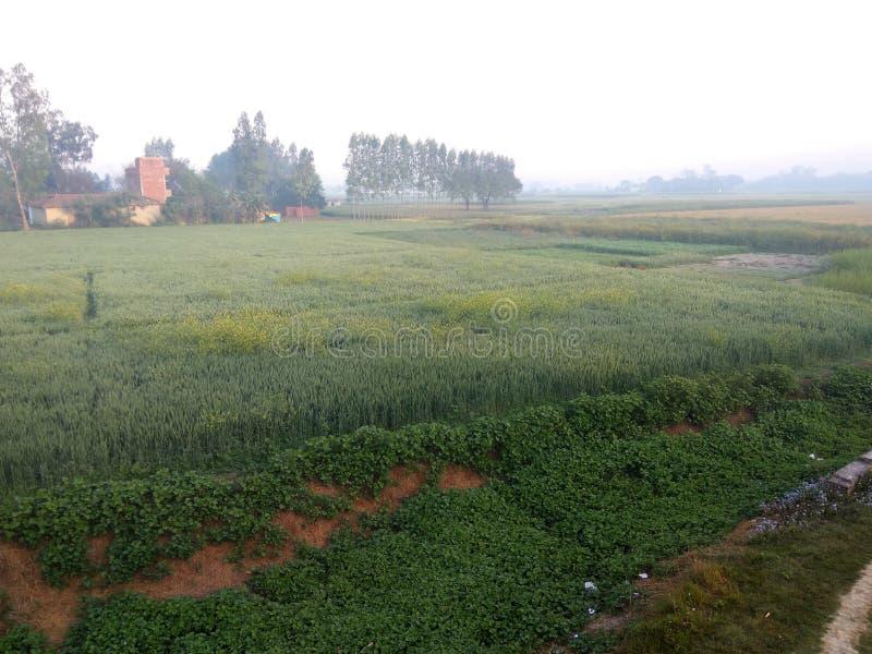 Индийский Farmyard деревни стоковое фото