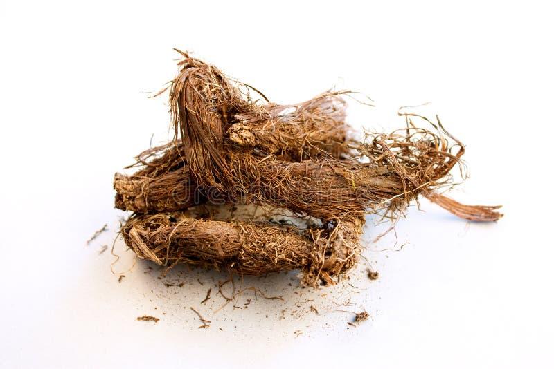 индийское spikenard muskroot jatamanshi стоковые фото