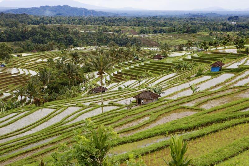 Индонезия Террасы риса стоковая фотография rf