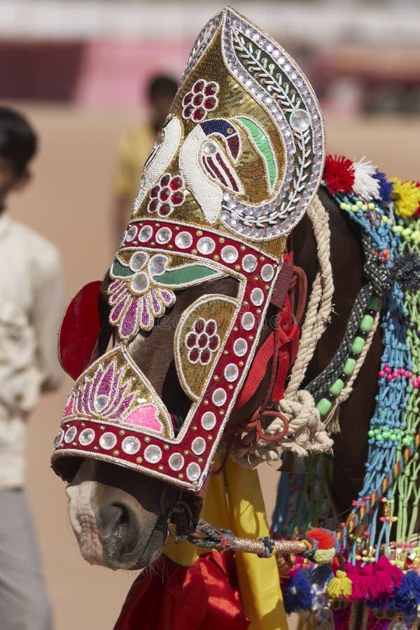 инец лошади празднества стоковая фотография rf