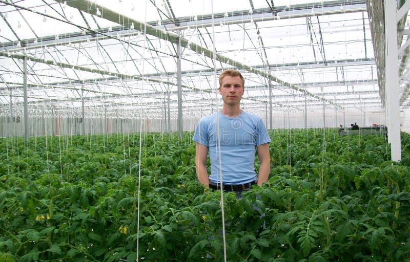 Инженер земледелия стоковые фотографии rf