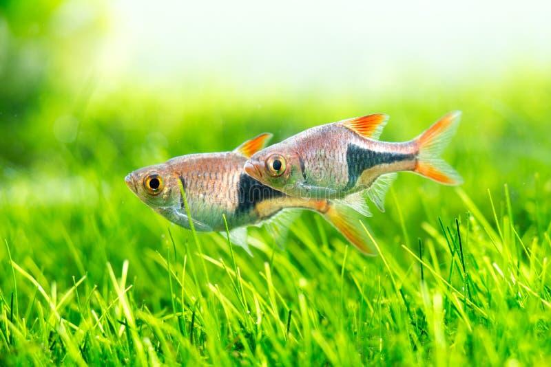 линия белизна рыб чертежа аквариума черная стоковое фото