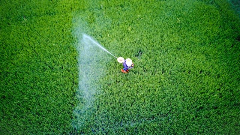 Инсектицид брызг фермера в ферму риса стоковые изображения