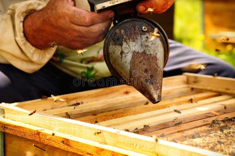 Инструмент beekeepers курильщика для того чтобы держать пчел далеко от крапивницы стоковое изображение rf